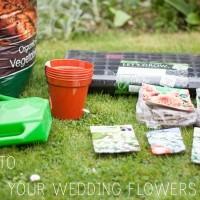 Grow Wedding Flowers DIY