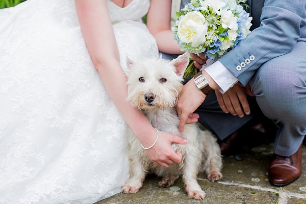 Fresh Fun Relaxed Blue & Green Wedding Dog Pet http://www.katherineashdown.co.uk/