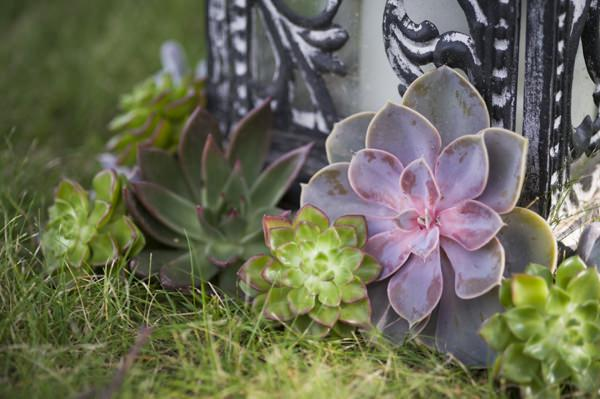 Ethereal Woodland Wedding Succulents Ideas http://www.careysheffield.com/