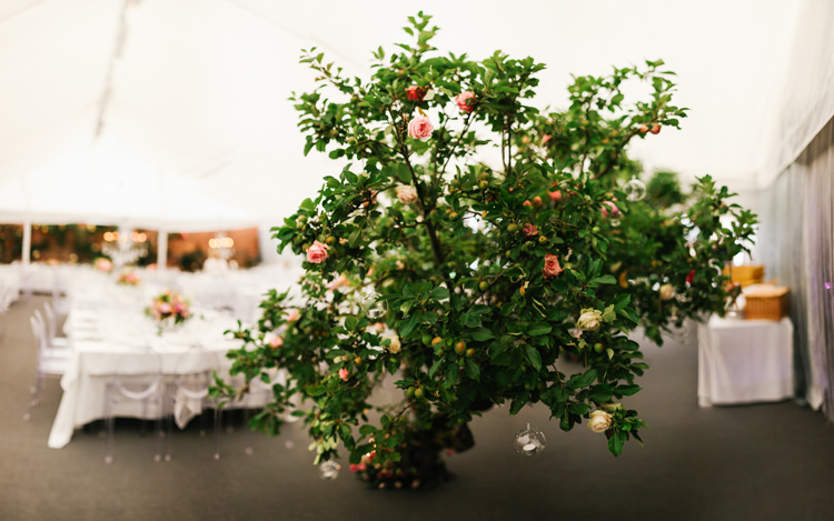 Trees Flowers Roses Beautiful English Garden Blooms Marquee Wedding http://www.sansomphotography.co.uk/