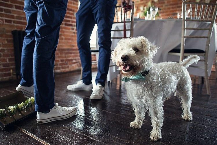 Dog Ring Bearer Wedding Advice Planning Help http://assassynation.co.uk/