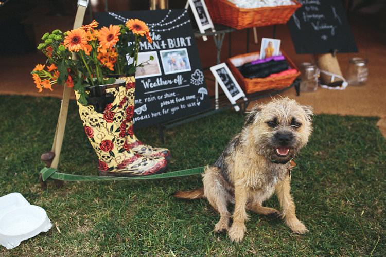 Dog Pet Wedding Ideas Help Advice Planning http://www.redonblonde.com/