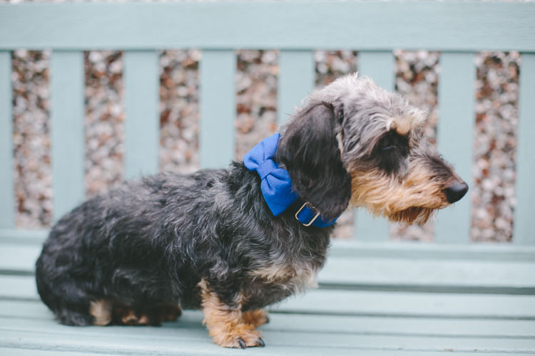 Dog Pet Pup Bow Tie Industrial Indie Autumn City Wedding http://www.elliegracephotography.co.uk/