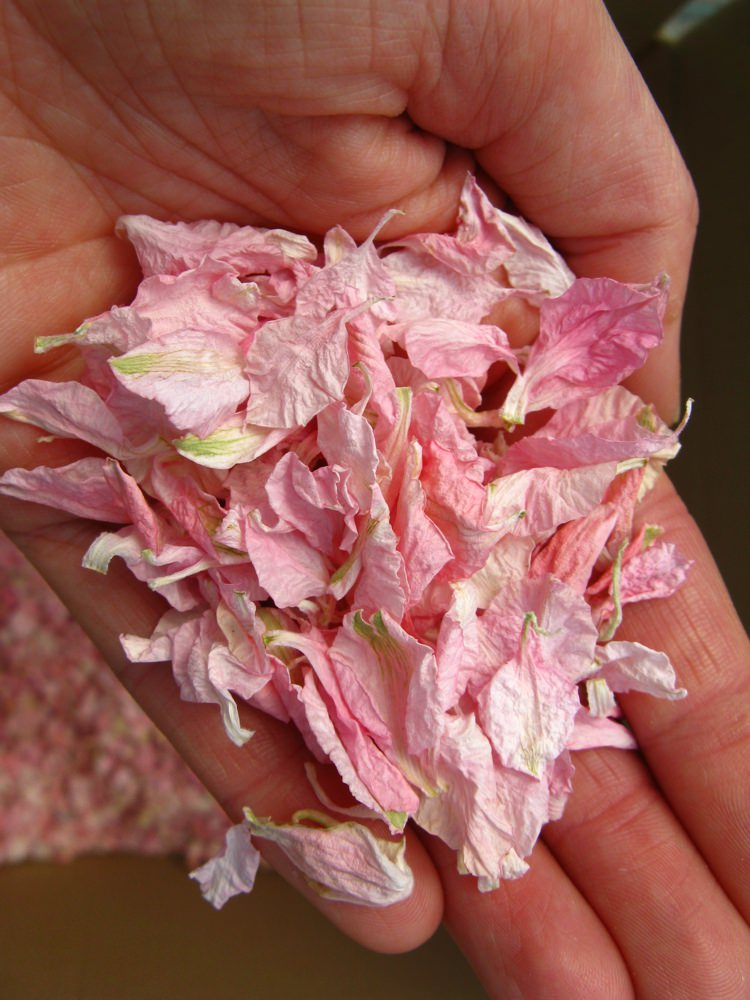 Freshly picked Pale Pink Delphiniums. Credit- The Real Flower Petal Confetti Company