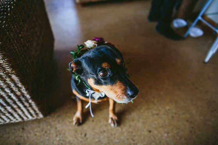 Dog Pet Flower Collar Whimsical Barn Wedding Australia http://throughthewoodsweran.co.uk/