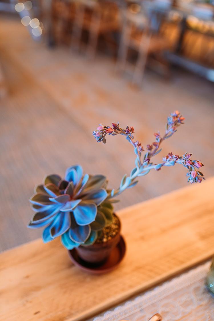 Succulent Pots Decor Creative Festival Tipi Wedding http://www.annapumerphotography.com/