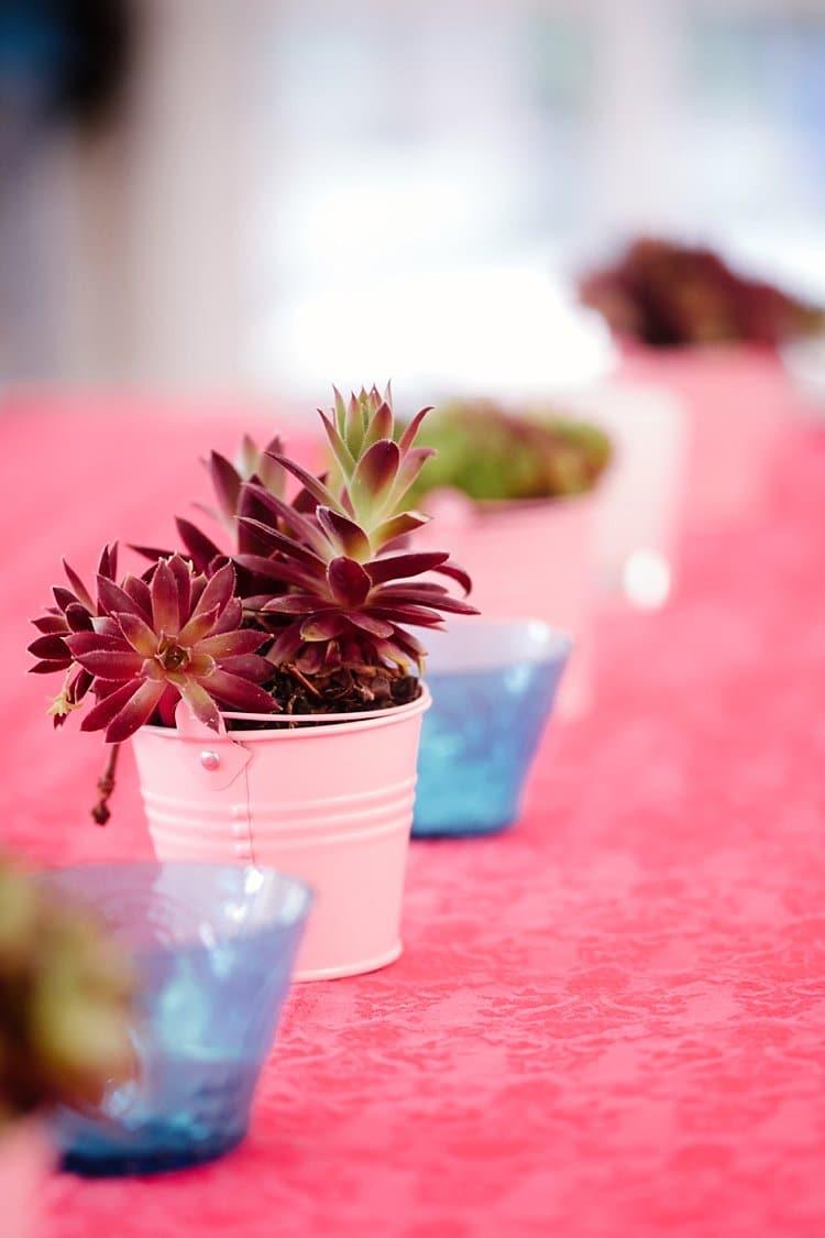 Succulent Pot Tropical 1920s Pink Budget Wedding http://lilysawyer.com/