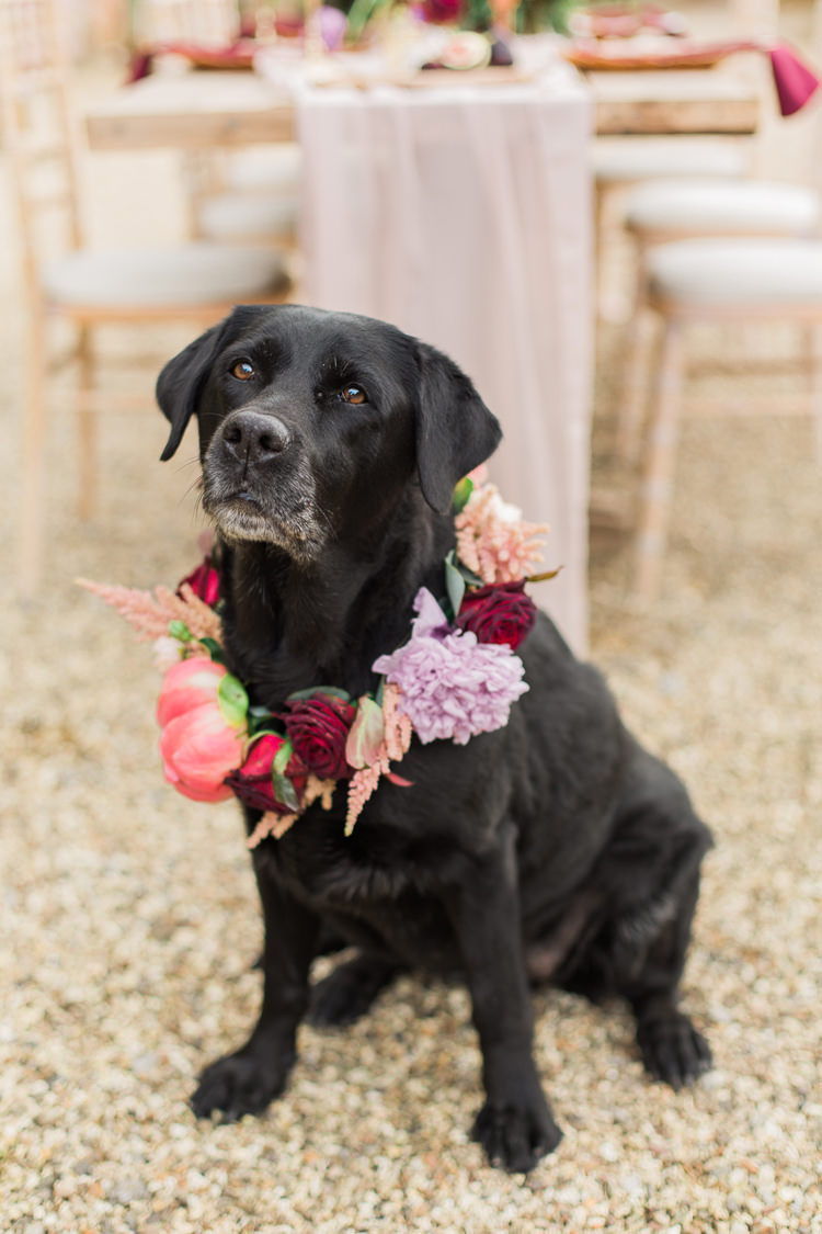 Dog Collar Flowers Wreath Pet Fine Art Bohemian Luxe Wedding Ideas http://jessicadaviesphotography.co.uk/