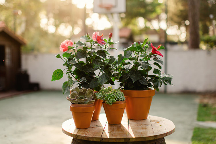 Wooden Barrel Table Potted Succulents Pink Plants Hibiscus Basketball Court Homely Vintage Villa Wedding Portugal http://www.mattandlenaphotography.com/