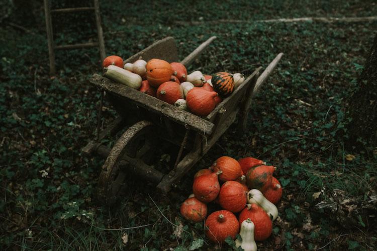Wooden Wheelbarrow Orange Cream Pumpkins Squash Ladder Organic Woodland Elopement Wedding Ideas http://www.miraalpajarito.es/