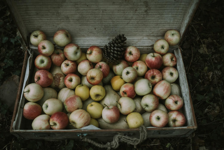 Vintage Suitcase Fresh Apples Pinecone Organic Woodland Elopement Wedding Ideas http://www.miraalpajarito.es/
