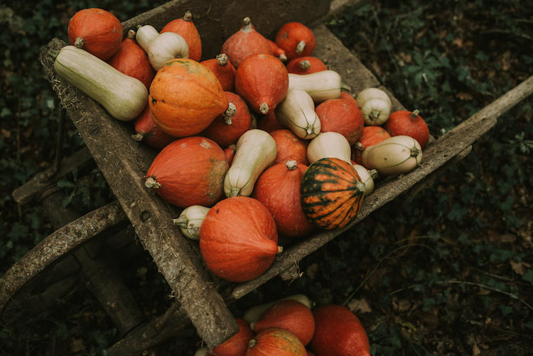 Wooden Wheelbarrow Orange Cream Pumpkin Squash Organic Woodland Elopement Wedding Ideas http://www.miraalpajarito.es/