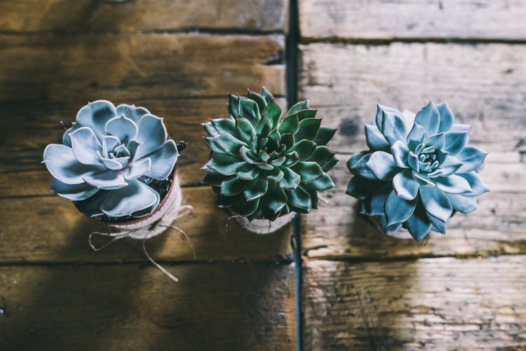 Succulents Decor Magical Bohemian Barn Wedding http://www.jamespowellphotography.co.uk/
