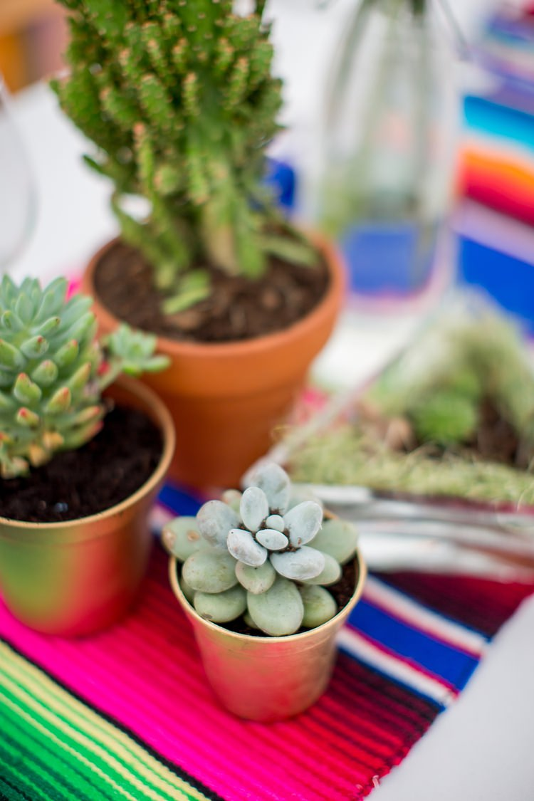 Potted Succulent Decor Mexican Inspired Colourful Cactus Wedding http://katherineashdown.co.uk/