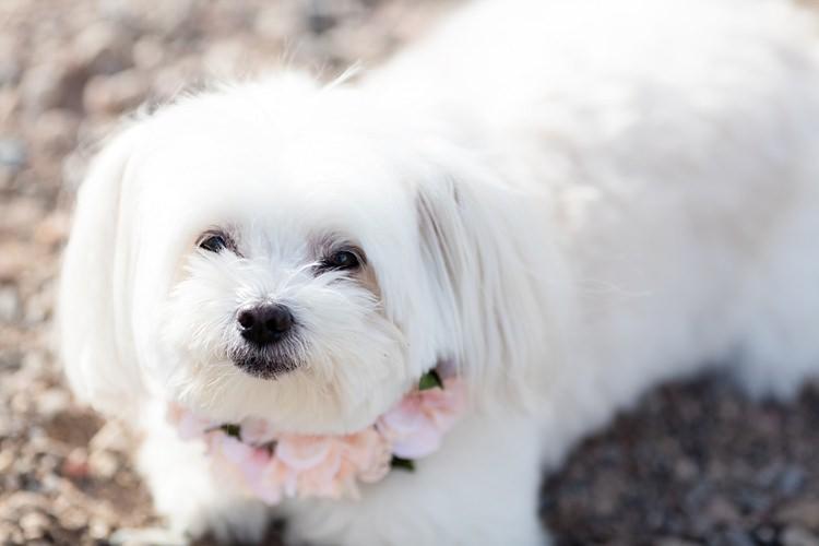 Cute Puppy Pink Floral Collar Romantic Mountain Wedding Colorado http://irvingphotographydenver.com/