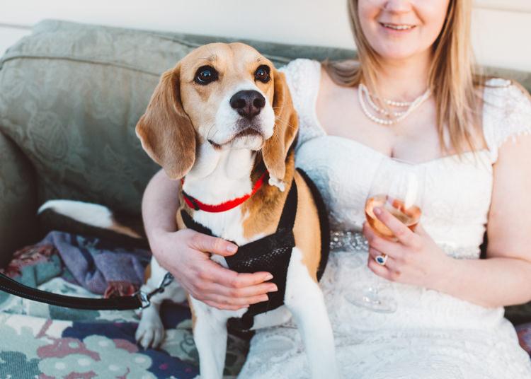 Dog Pet Low Key Pastel Seaside Wedding http://holliecarlinphotography.com/