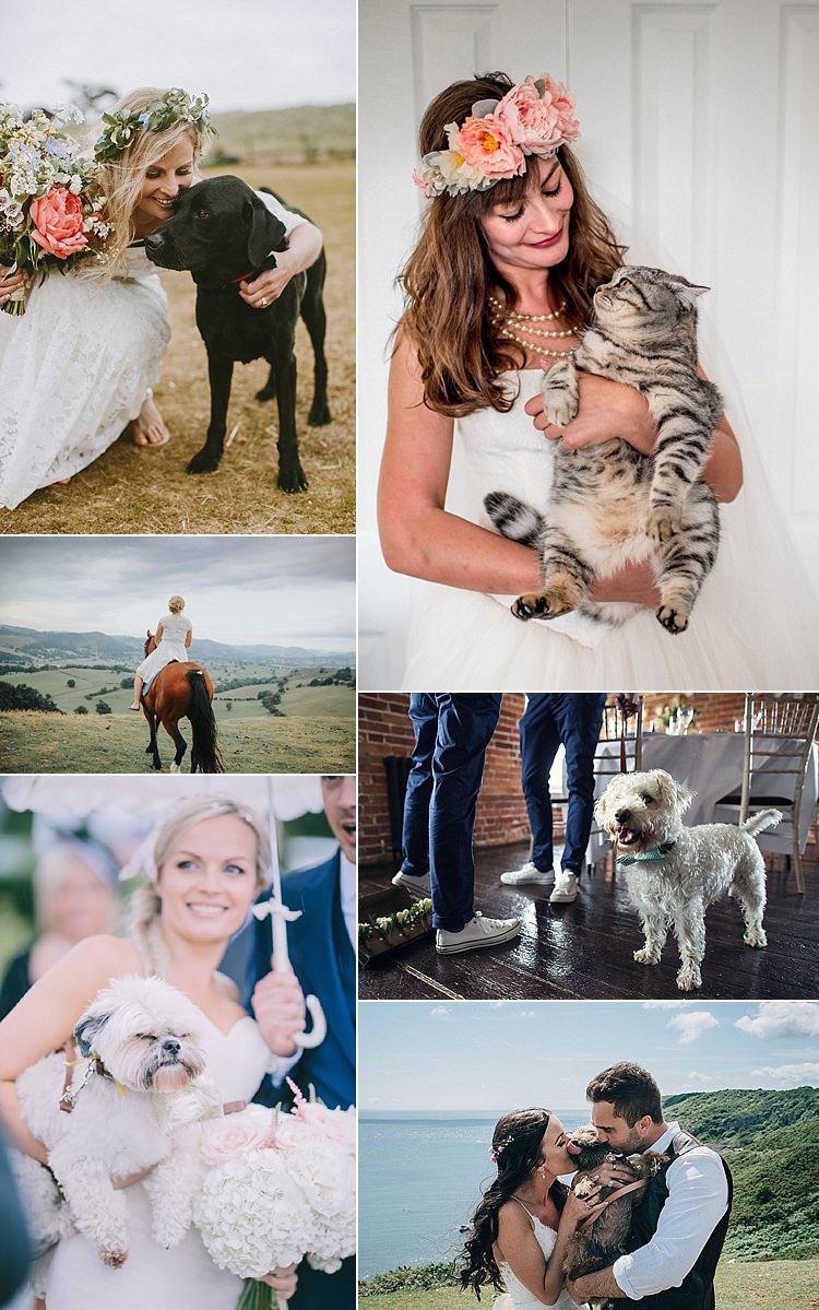 Pets Weddings Dog Cat Horse Ideas Planning Advice