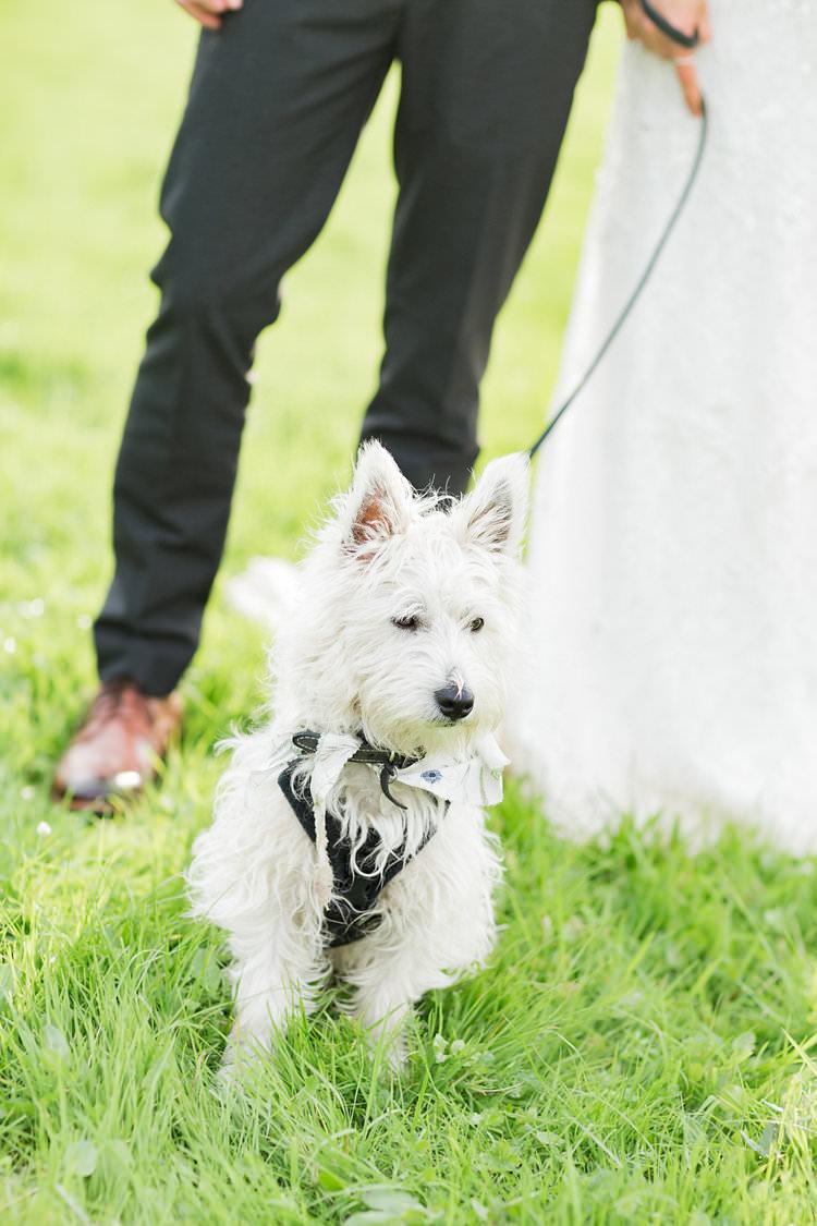 Dog Pet Fun Late Summer Outdoor Farm Wedding http://bowtieandbellephotography.co.uk/