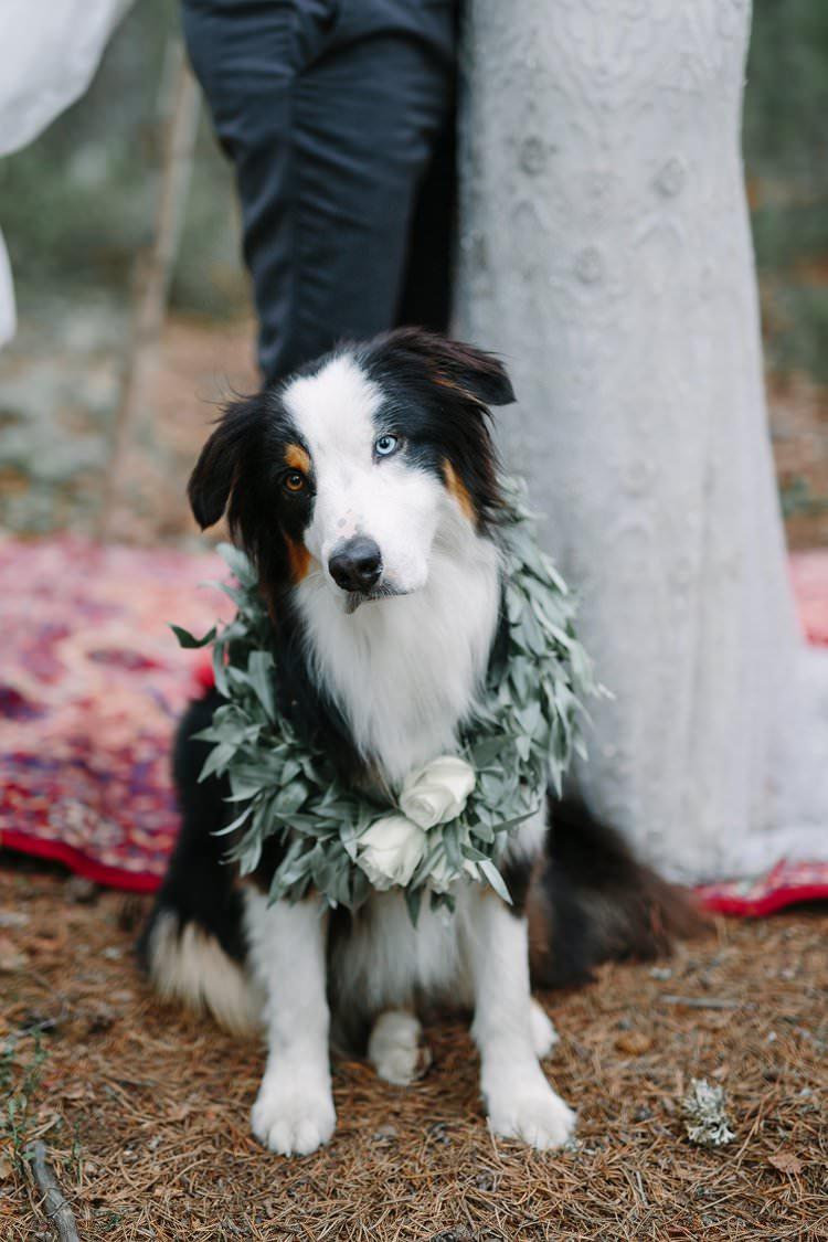 Dog Pet Wreath Collar Foliage Bohemian Luxe Greenery White Wedding Ideas Sweden http://www.lindapauline.se/
