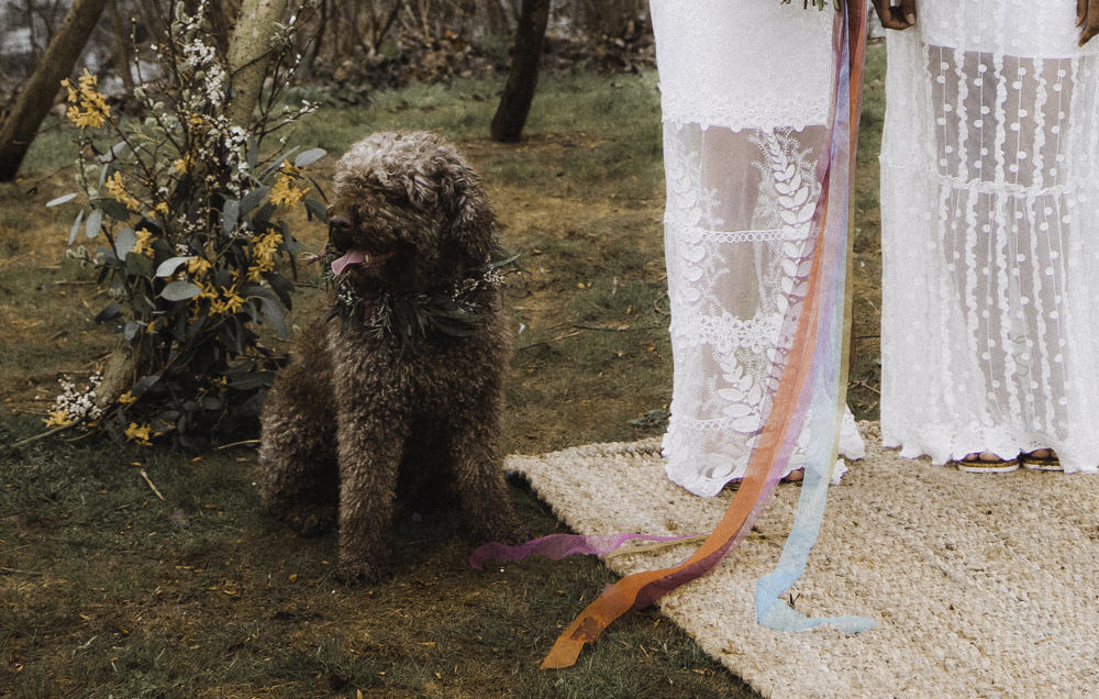 Dog Pet Colourful Boho Festival Wedding Ideas Ella Violet Photography