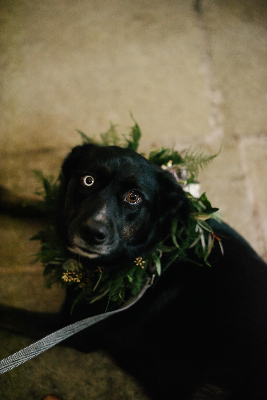 Pet Dog at Wedding Garland Foliage Orange Tree House Wedding Winter You Them Us Photography