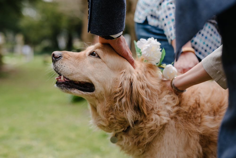 Outdoor Farm Field Marquee Happy Pet Dog Floral Collar Leash | Rustic and Relaxed Spring Tipi Wedding Inbetween Days Photography