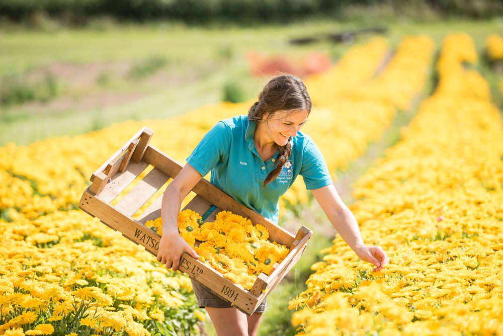 Shropshire Petals picking flowers in the field