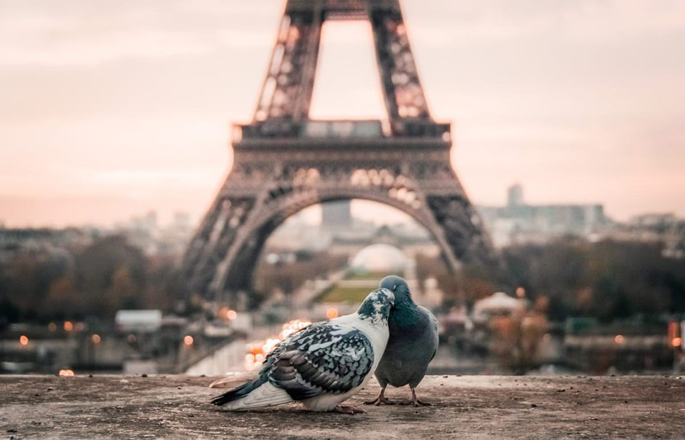 No Fly Without Flights Honeymoon Ideas