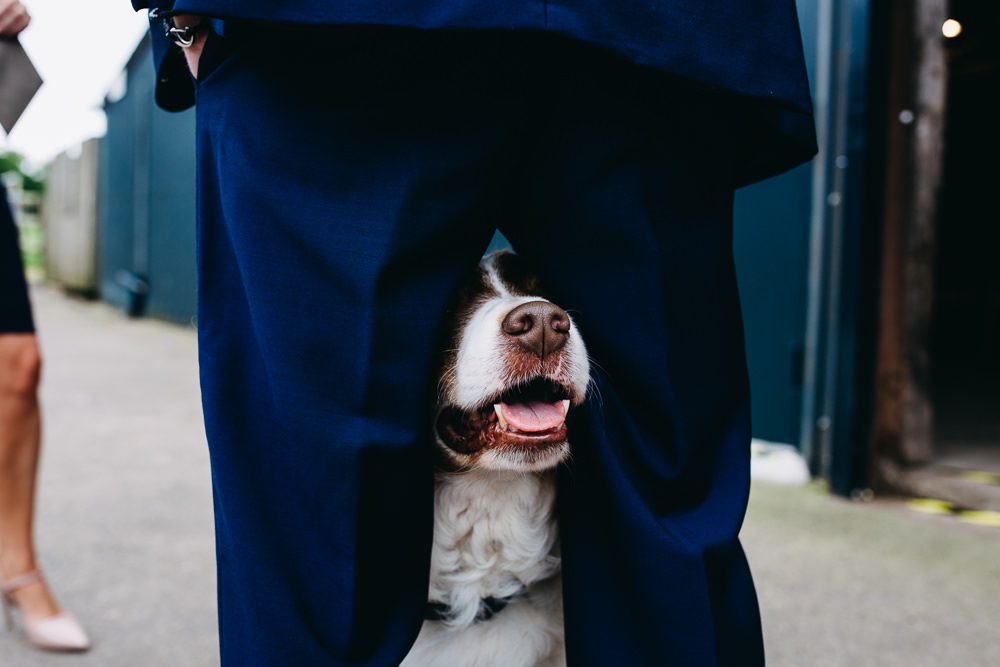 Dog Pet Bawdon Lodge Farm Wedding Hannah Hall Photography