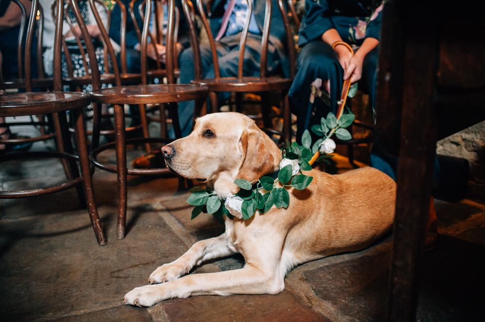 Pet Dog Greenery Collar Cripps Barn Wedding Isobel Murphy Photography