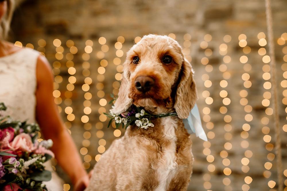 Dog Pet Floral Collar Blossom Barn Wedding Ideas Hayley Baxter Photography