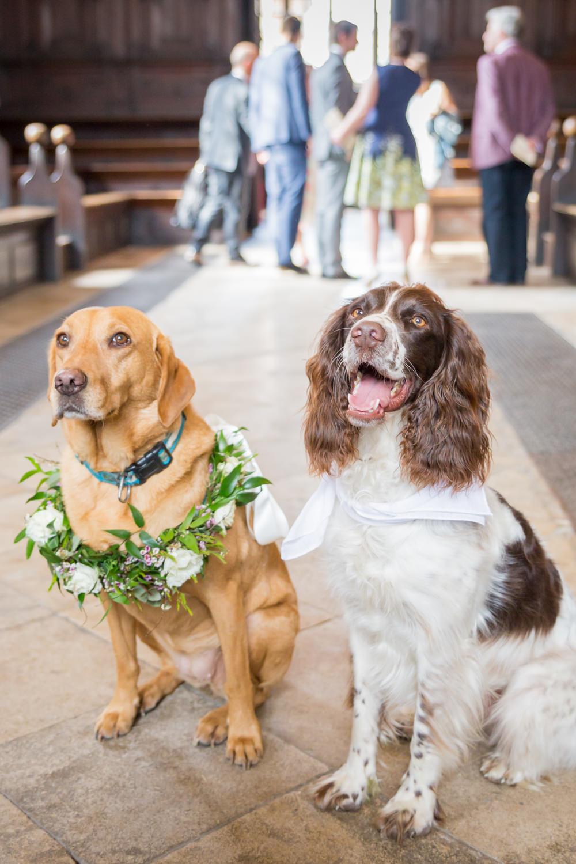 Dogs Floral Collar Wreath Bodleian Library Wedding Anita Nicholson Photography