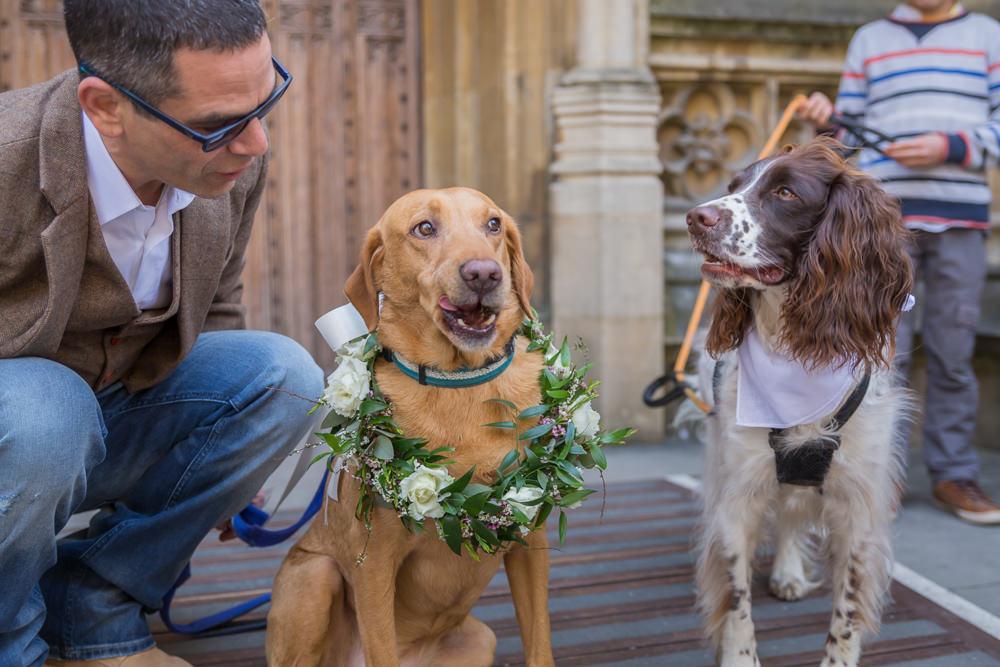 Dog Floral Wreath Collar Bodleian Library Wedding Anita Nicholson Photography
