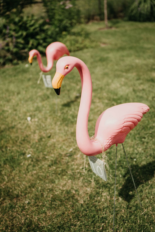 Flamingo Hoopla Celeste Marquee Wedding Sarah Longworth Photography