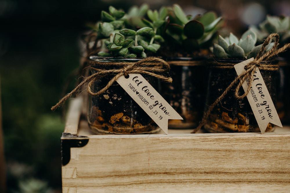 Succulent Favours Orlando Wedding Dani Nichol Photography