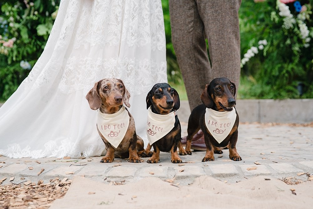 Pet Wedding Ideas Vicky Plum Photography