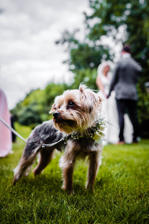 Pet Dog Secret Garden Wedding James Powell Photography