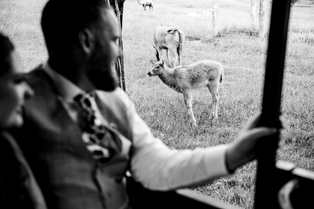 Safari Park Wedding Jonny Barratt Photography
