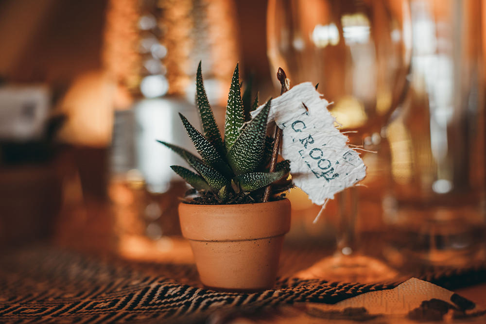 Pot Plants Succulent Favours Place Names Autumnal Rustic Wedding Mark Tattersall Photography