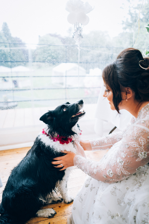 Dog Ring Bearer Tullibole Castle Wedding Casey Avenue Photography