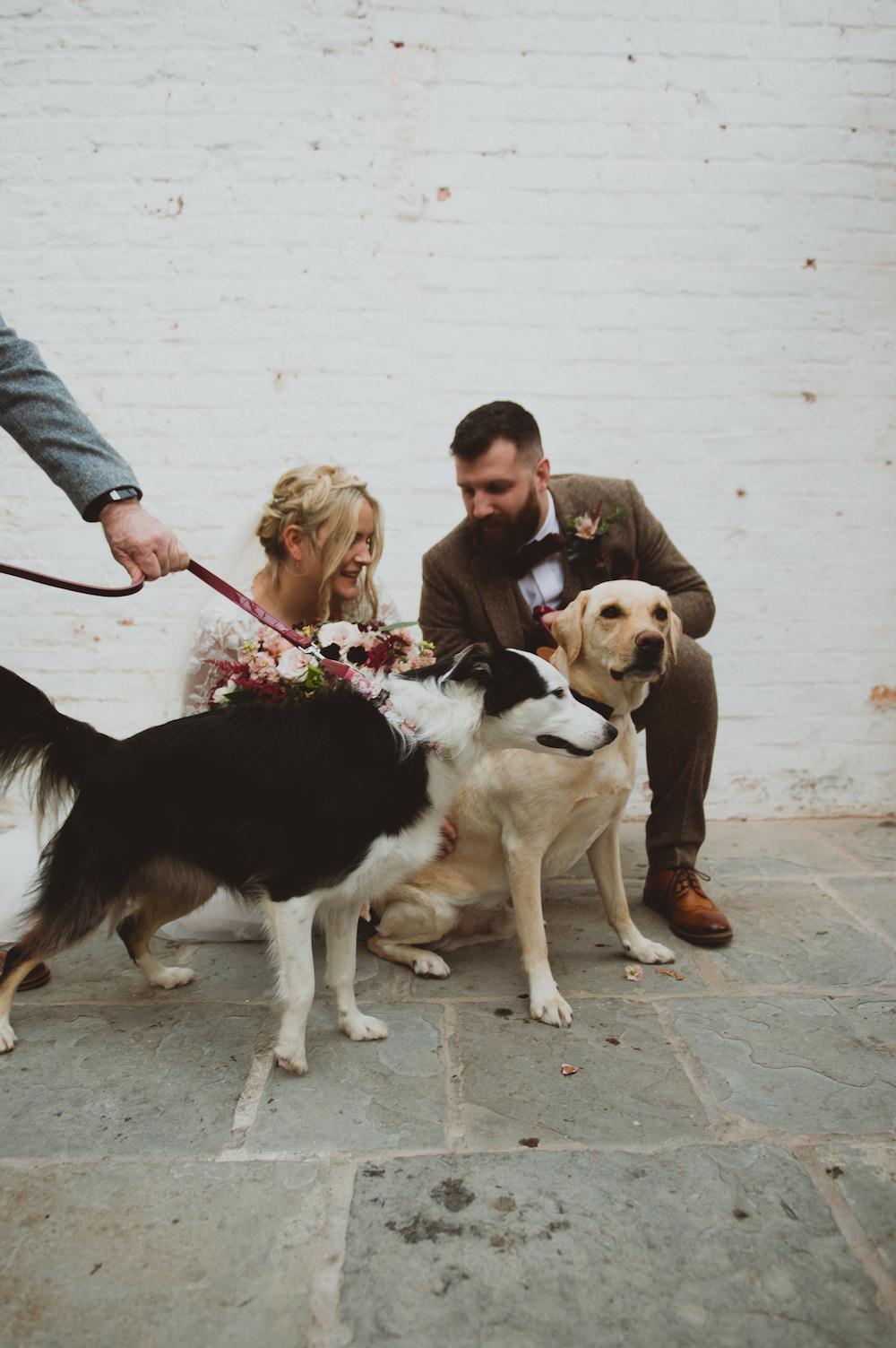 Dogs Pets Garthmyl Hall Wedding Sasha Weddings