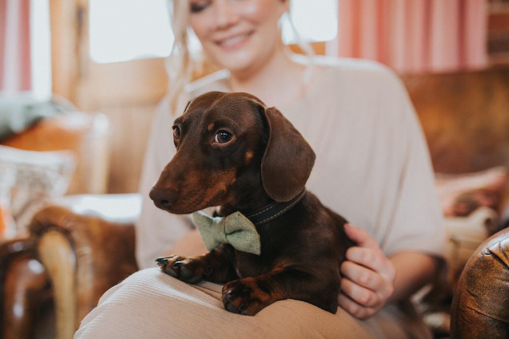 Dog Pet Bow Tie Pennard Hill Farm Wedding MT Studio